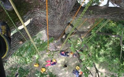 Předáváme zkušenosti mladým stromolezcům