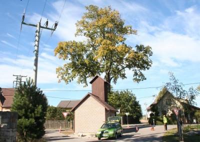 Datel odborné ošetření stromů v Krkonoších (1)