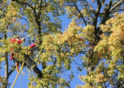 Datel odborné ošetření stromů v Krkonoších (2)