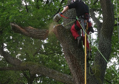 Ošetření stromů zdarma