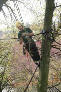 Instalace dynamických vazeb Datel odborná péče o stromy (1)