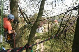 Instalace dynamických vazeb Datel odborná péče o stromy (3)