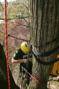 Instalace dynamických vazeb Datel odborná péče o stromy (4)