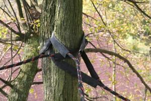 Instalace dynamických vazeb Datel odborná péče o stromy (5)