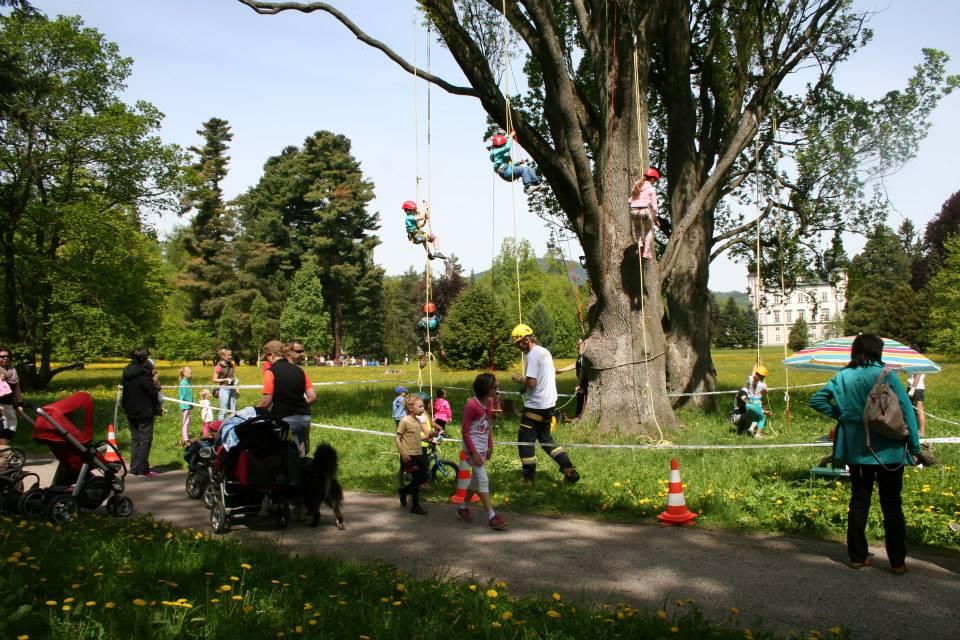 Lezení v korunách stromů Datel arboristika Krkonoše (1)