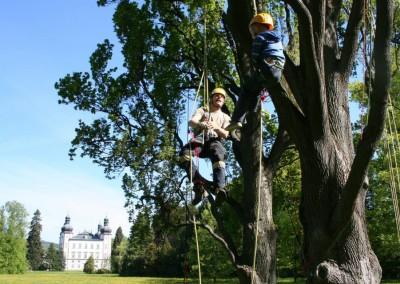 Lezení v korunách stromů Datel arboristika Krkonoše (2)