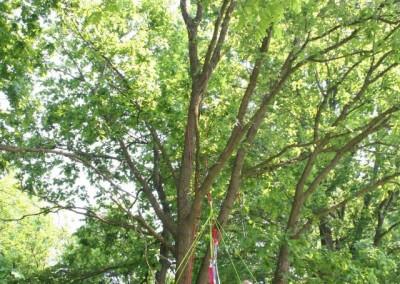 Lezení v korunách stromů Datel arboristika Krkonoše (5)