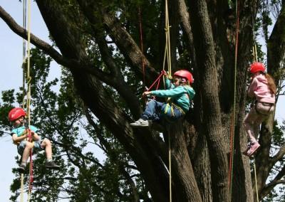 Lezení v korunách stromů Datel arboristika Krkonoše (7)
