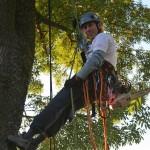 Zdravotní řez na jasanech Datel odborná péče o stromy (1)