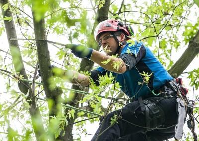 European Tree Worker Jakub Fanta