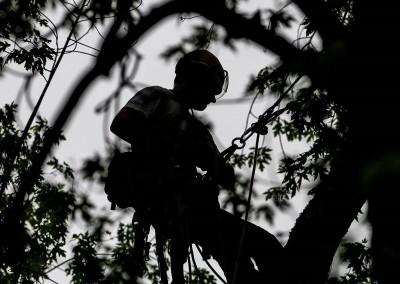 krkonose-strom-svoboda0616-09_galerie-980