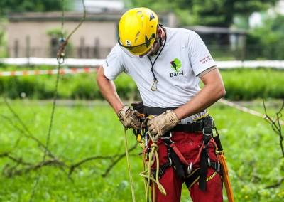 Ošetření stromu zdarma