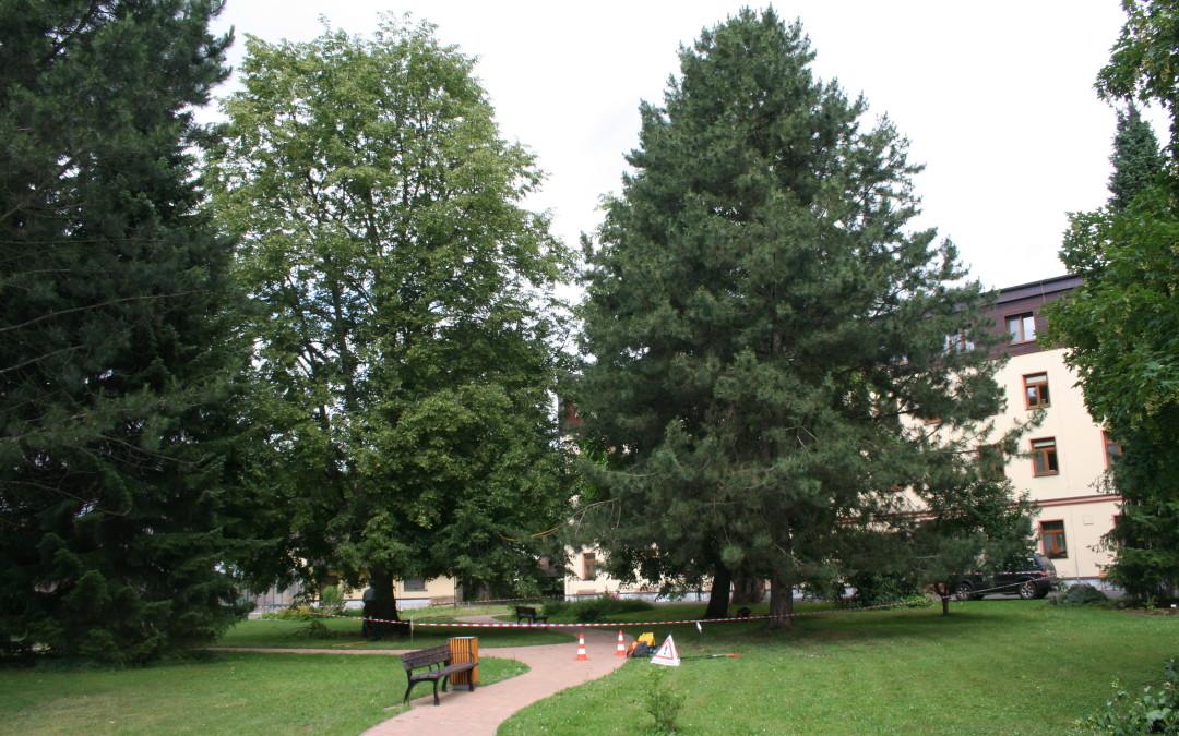 Ošetření stromů Domov seniorů Vrchlabí