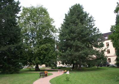 Péče o stromy Vrchlabí