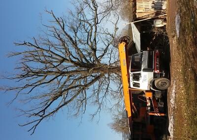 Obvodová redukce dubu v Rudníku