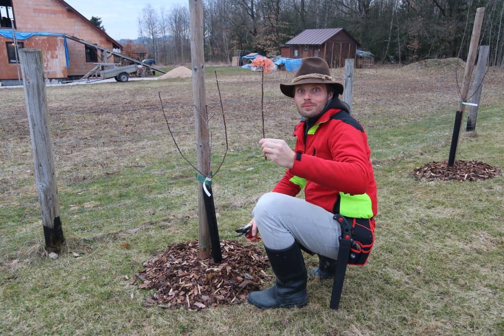 Řez ovocných stromů Krkonoše