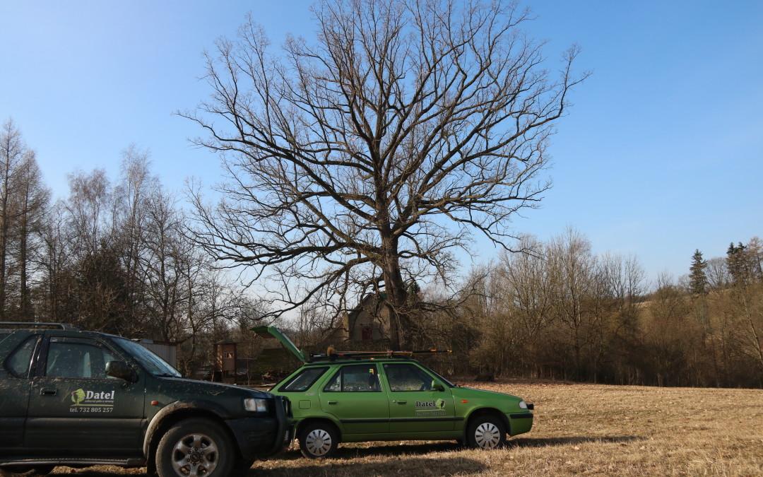 Obvodová redukce mohutného dubu v Rudníku