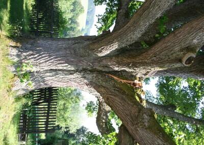 Místo vylomení kosterní větve
