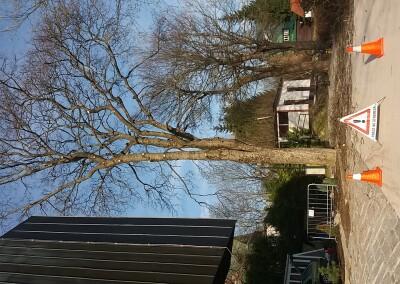 Ošetření stromů Špindlerův Mlýn