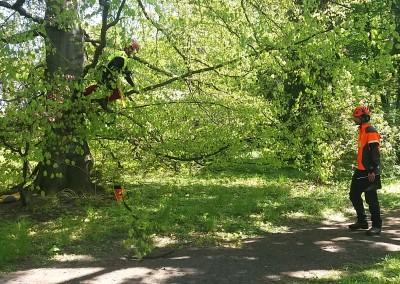 Certifikace European Tree Worker CZ 2017
