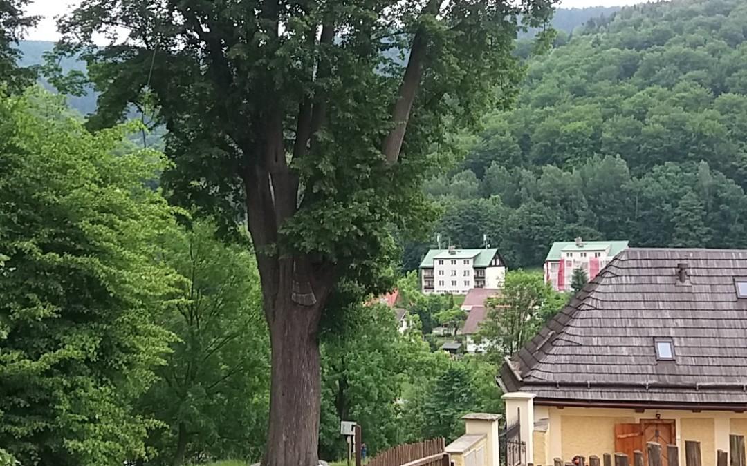 Ošetření 450 let staré lípy Horní Maršov 2017