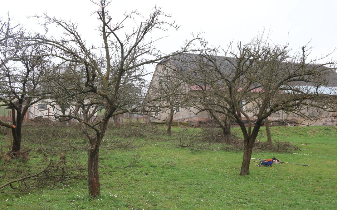 Řez ovocných dřevin v zahradách v Lánově a Valteřicích