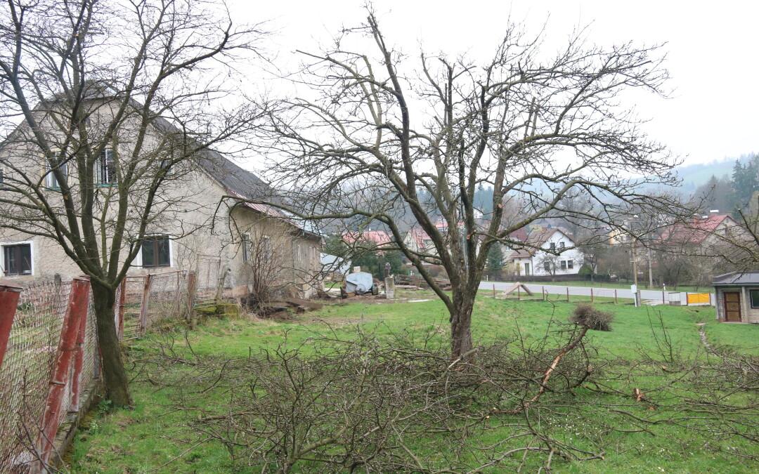 Řez ovocných stromů Valteřice